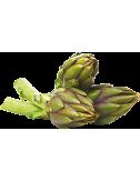Fresh spiny Artichoke