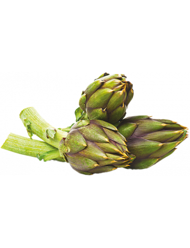 Fresh spiny Artichoke
