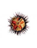 Sea Urchin Pulp